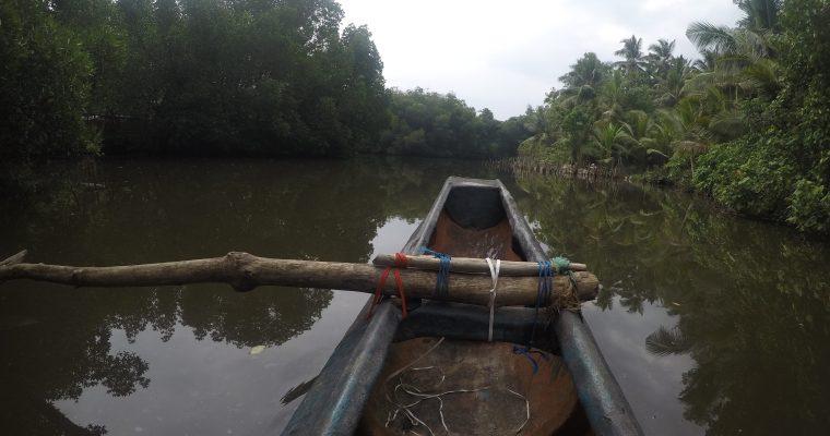 Mangroven Hikkaduwa