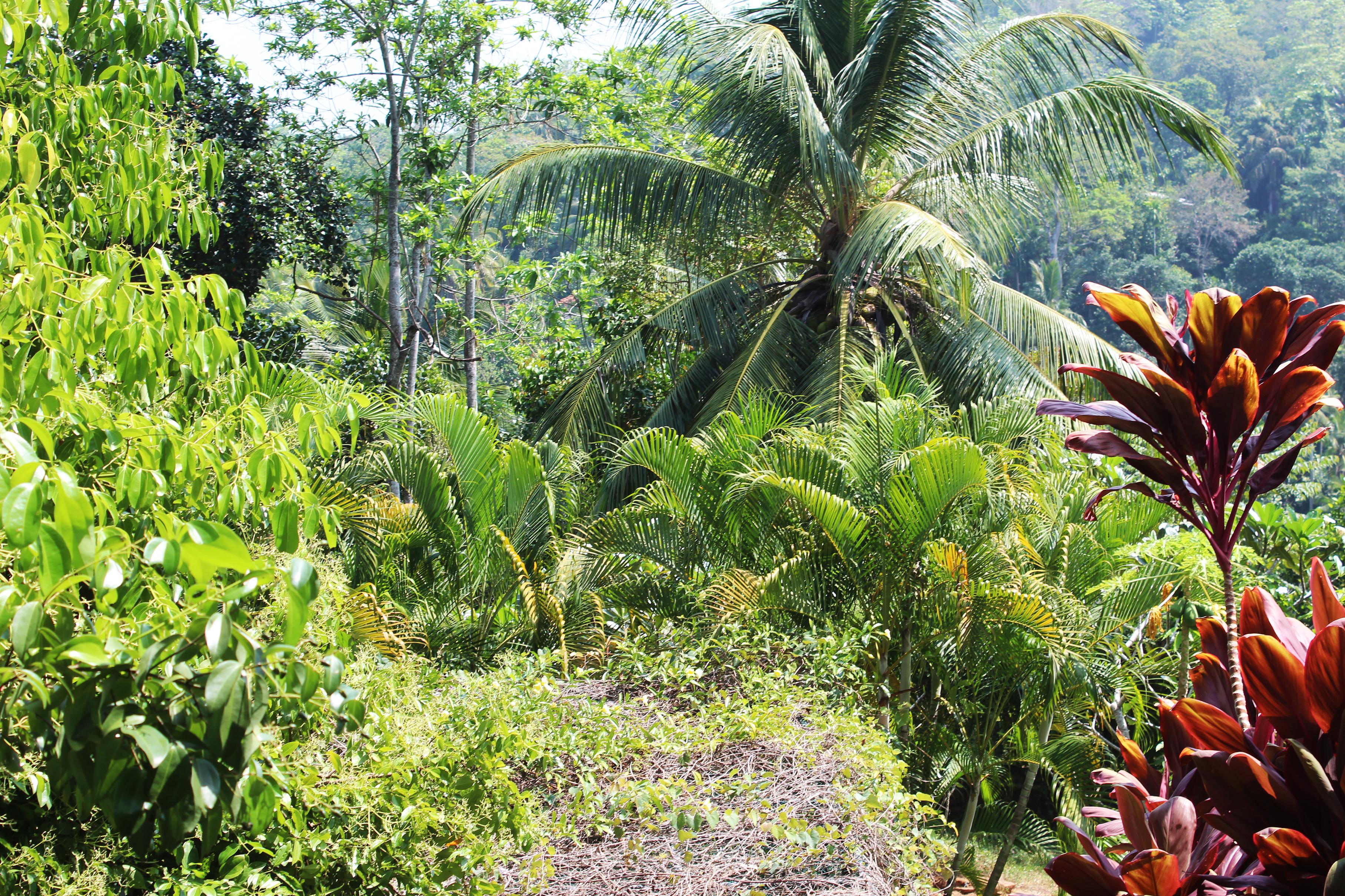 Rundreise Sri Lanka, die besten Orte
